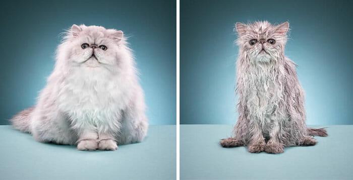 animais-antes-depois-do-banho_17