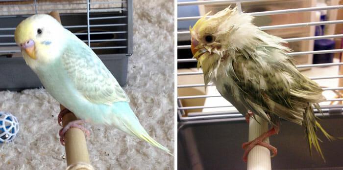 animais-antes-depois-do-banho_18