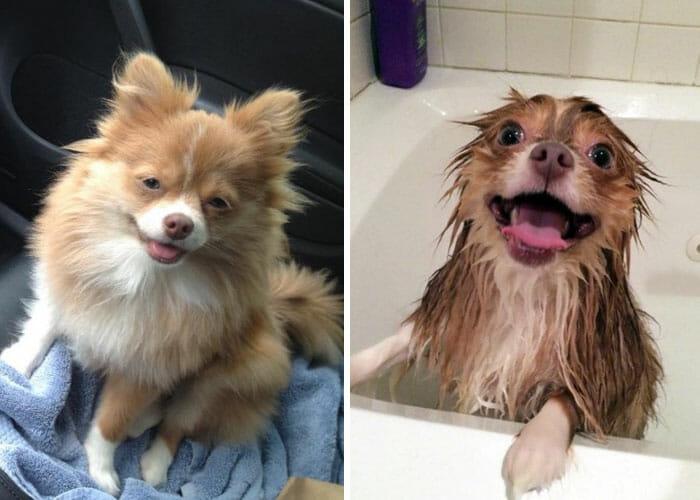 animais-antes-depois-do-banho_21