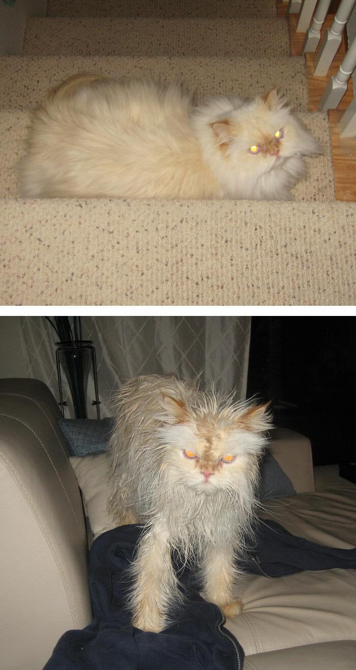 animais-antes-depois-do-banho_22