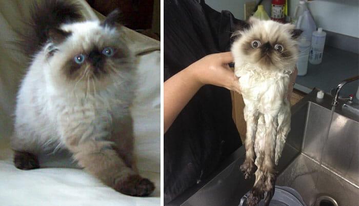 animais-antes-depois-do-banho_25