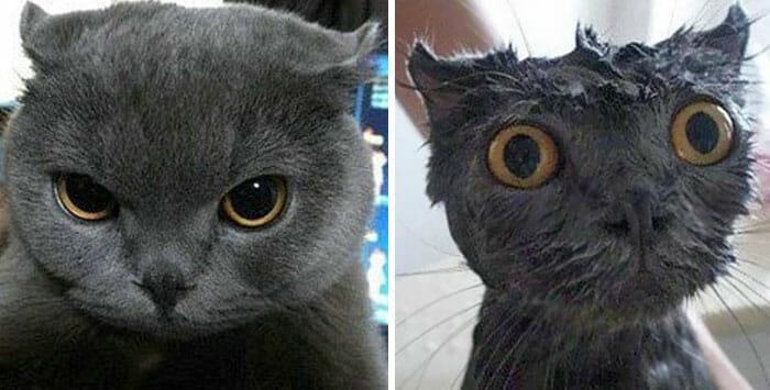 animais-antes-depois-do-banho_27