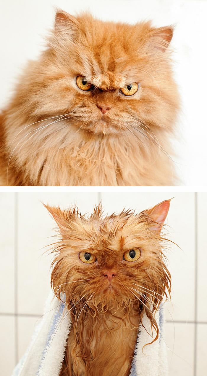 animais-antes-depois-do-banho_29