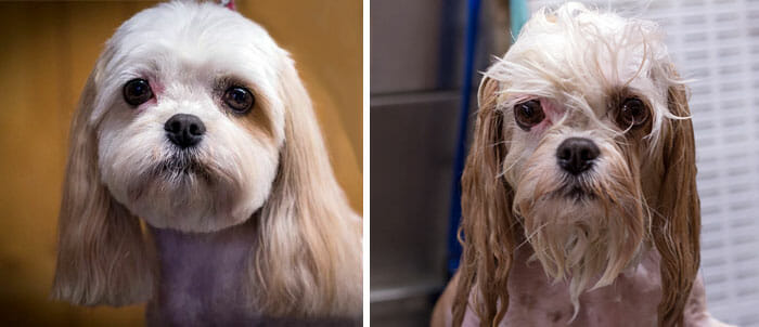 animais-antes-depois-do-banho_3