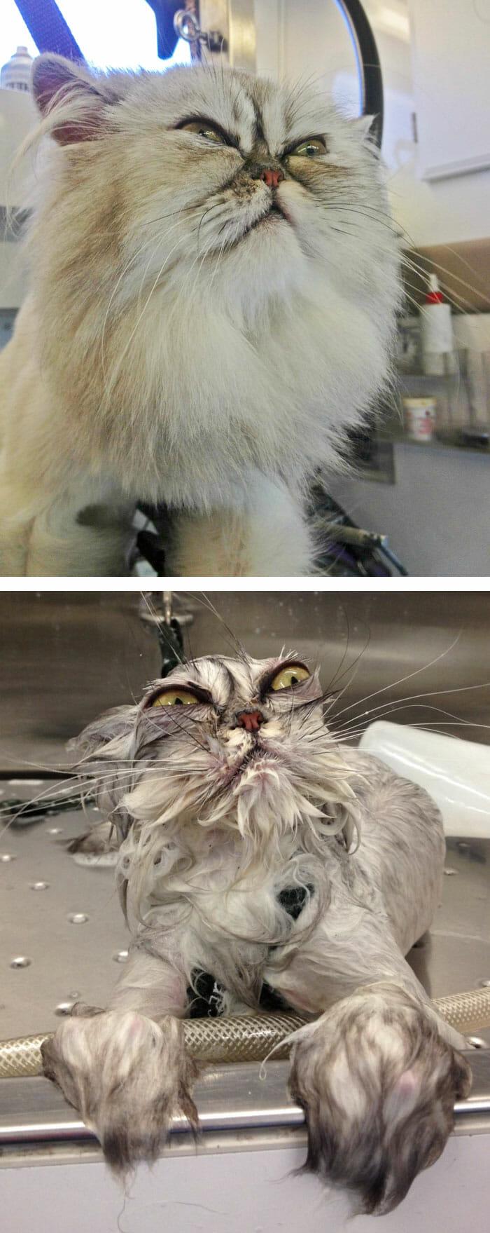 animais-antes-depois-do-banho_30