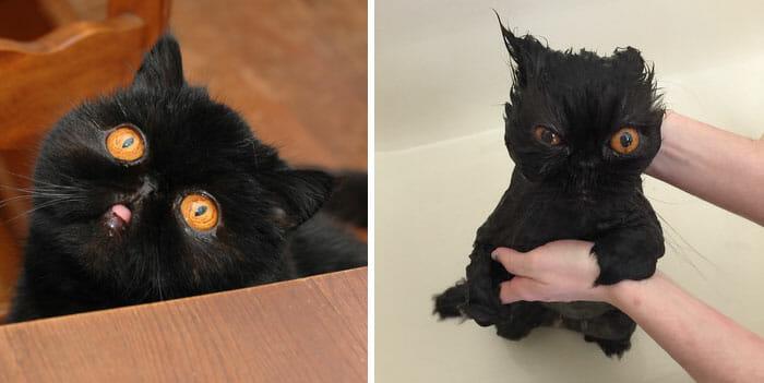 animais-antes-depois-do-banho_36