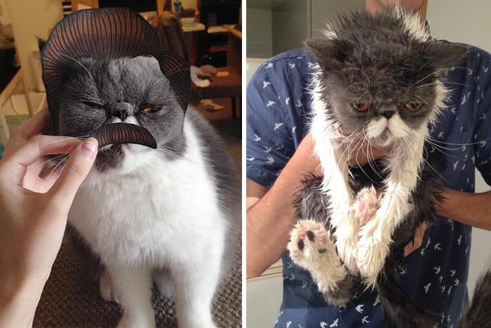 animais-antes-depois-do-banho_6
