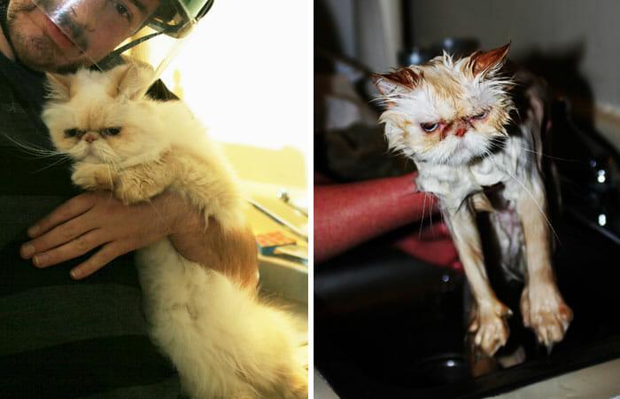animais-antes-depois-do-banho_9