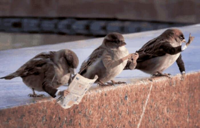 aves-com-bracos