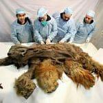 VÍDEO: 7 Animais Extintos que a Ciência Pode Trazer de Volta à Vida