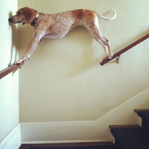 cachorros-dia-pior-que-o-seu_23