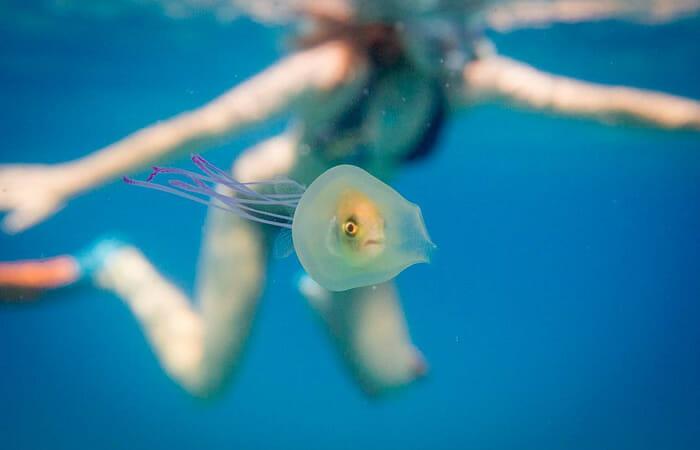 peixe-dentro-agua-viva