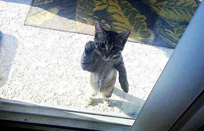 animais-querendo-entrar