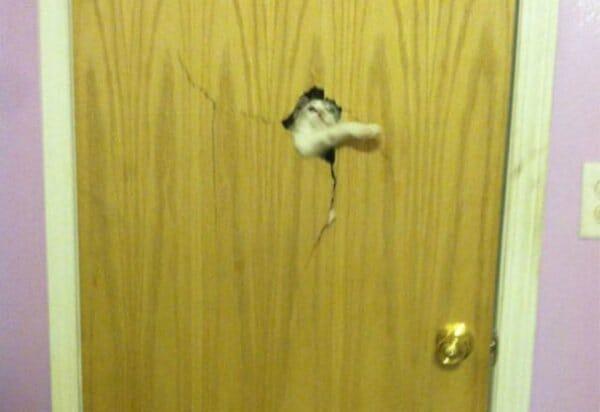 animais-querendo-entrar_1