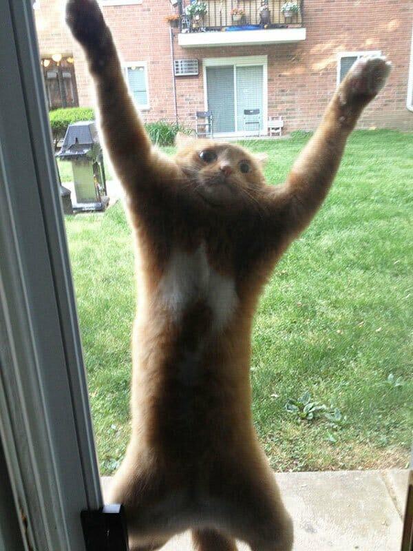 animais-querendo-entrar_15