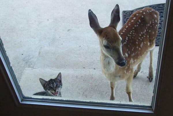 animais-querendo-entrar_16