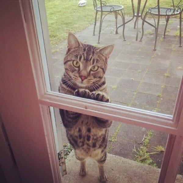 animais-querendo-entrar_17