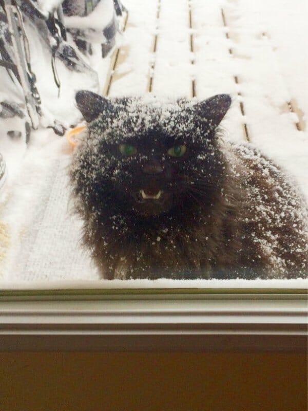 animais-querendo-entrar_18
