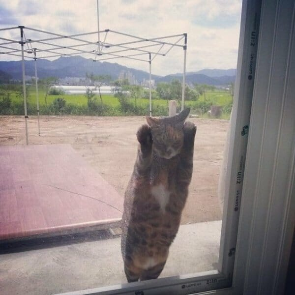 animais-querendo-entrar_2