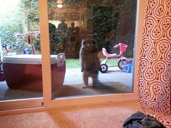 animais-querendo-entrar_22