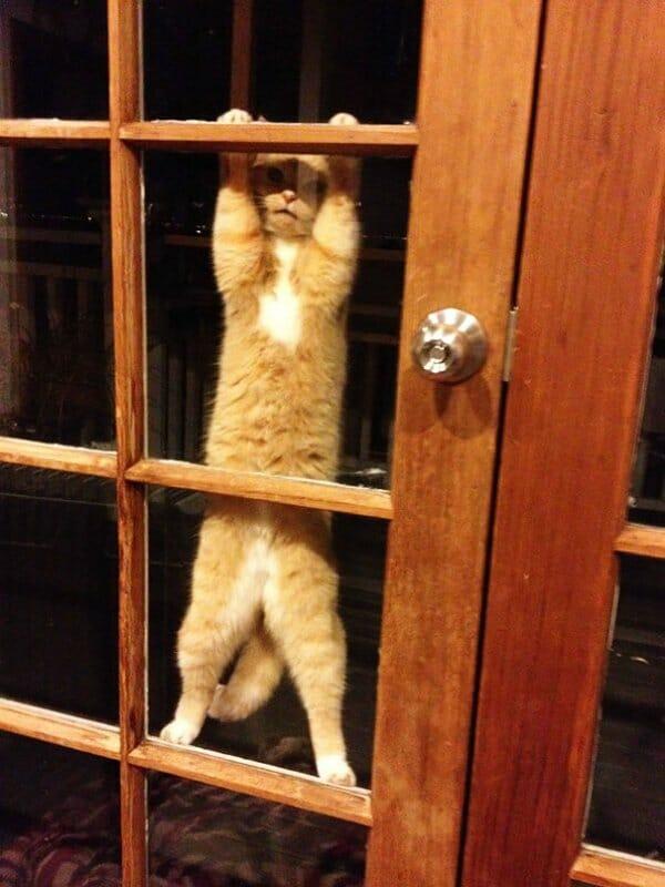 animais-querendo-entrar_25