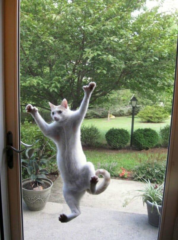 animais-querendo-entrar_3