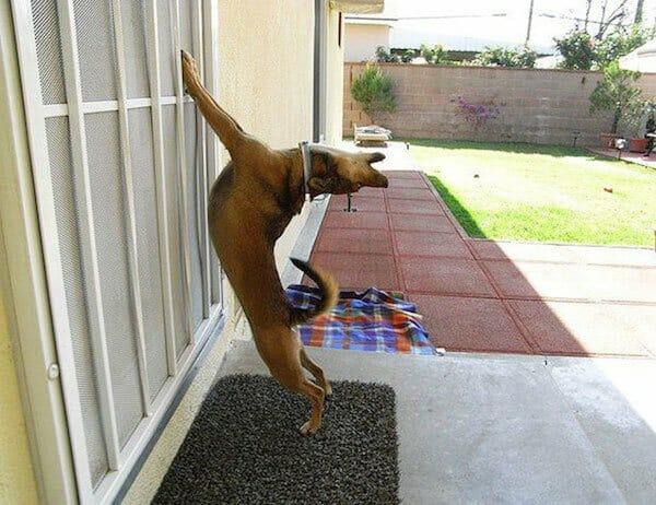 animais-querendo-entrar_6