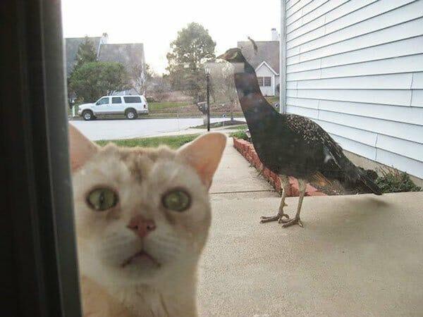 animais-querendo-entrar_8
