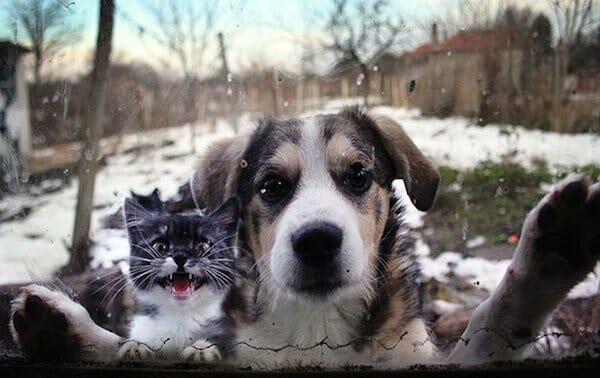 animais-querendo-entrar_9