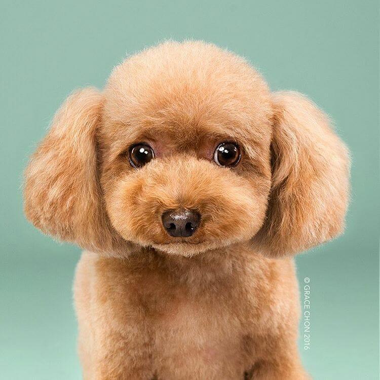 8 Comparativos Divertidos de Cachorros Antes e Depois de Serem Tosados