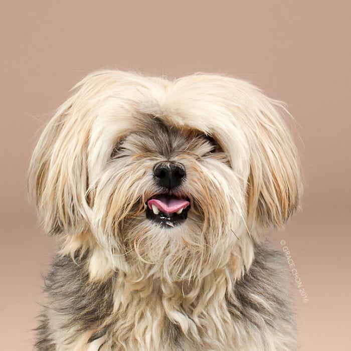 cachorro-antes-depois-tosa_2a