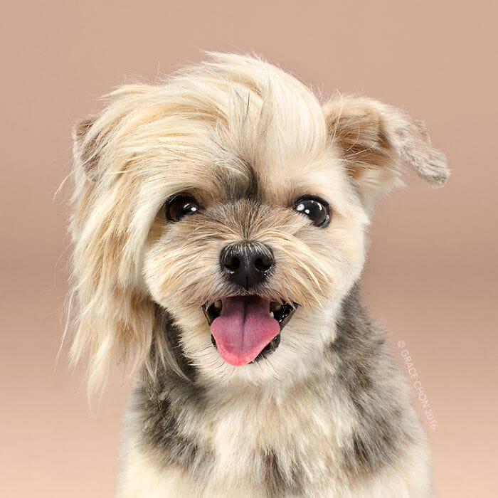 cachorro-antes-depois-tosa_2b