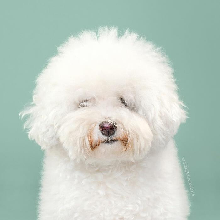 cachorro-antes-depois-tosa_3a
