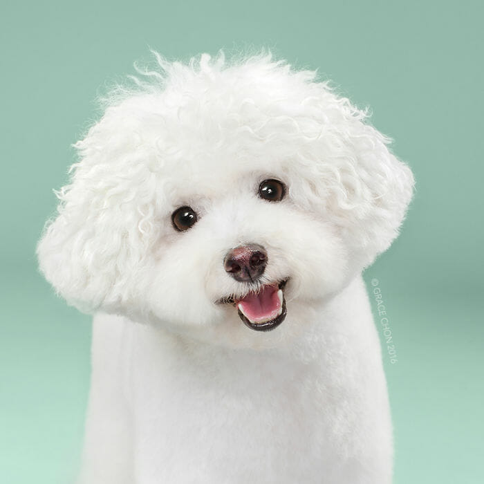 cachorro-antes-depois-tosa_3b