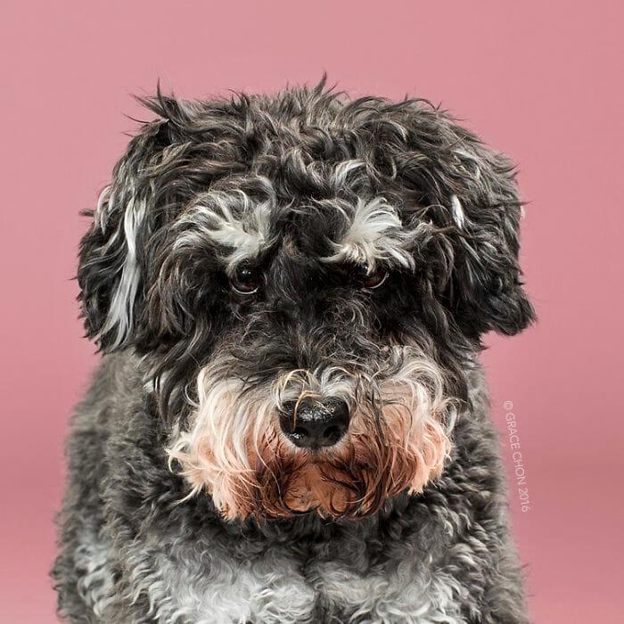 cachorro-antes-depois-tosa_4a
