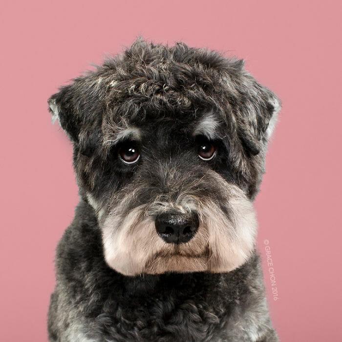 cachorro-antes-depois-tosa_4b
