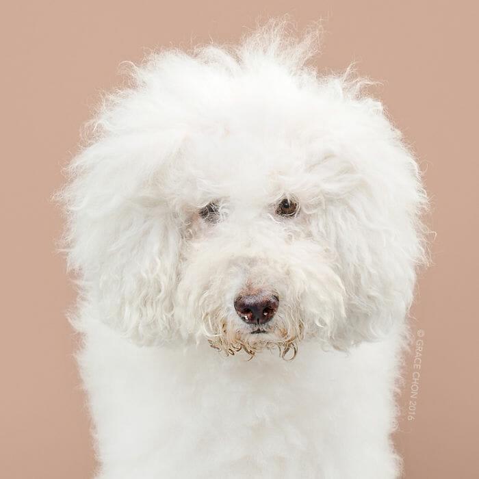 cachorro-antes-depois-tosa_6a