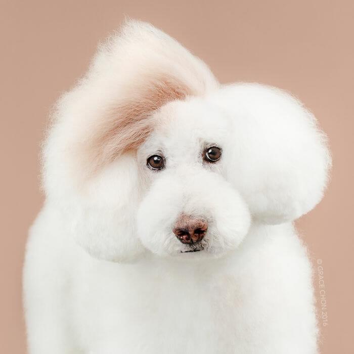 cachorro-antes-depois-tosa_6b