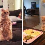 Gato-Humano Não Só Fica de Pé Como Também Julga Seus Donos Com Seu Olhar