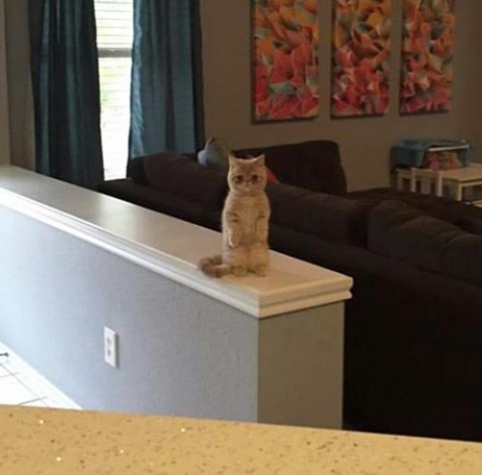 gato-humano_1