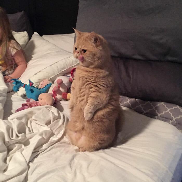 gato-humano_11