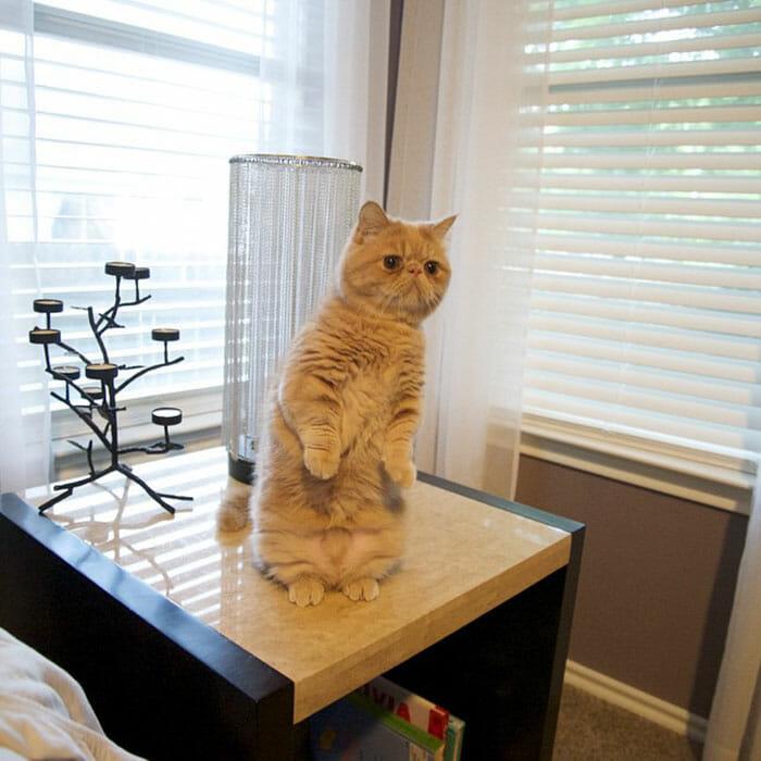 gato-humano_12