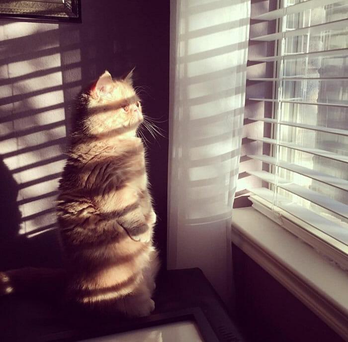 gato-humano_13