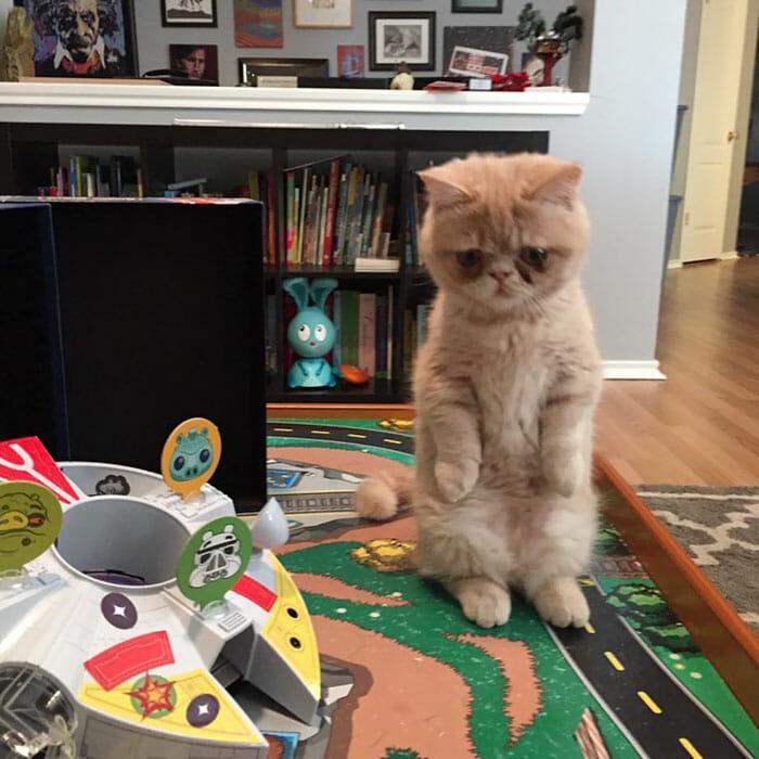 gato-humano_14
