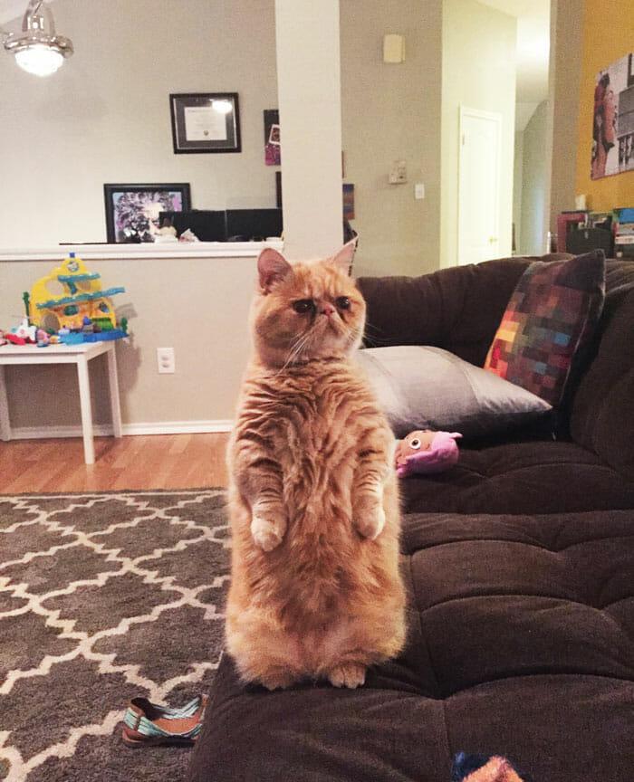 gato-humano_2