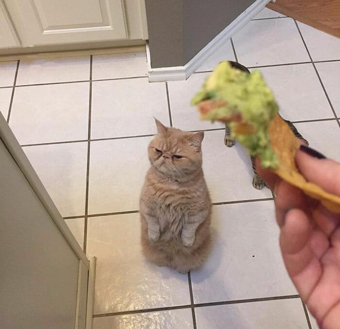 gato-humano_5