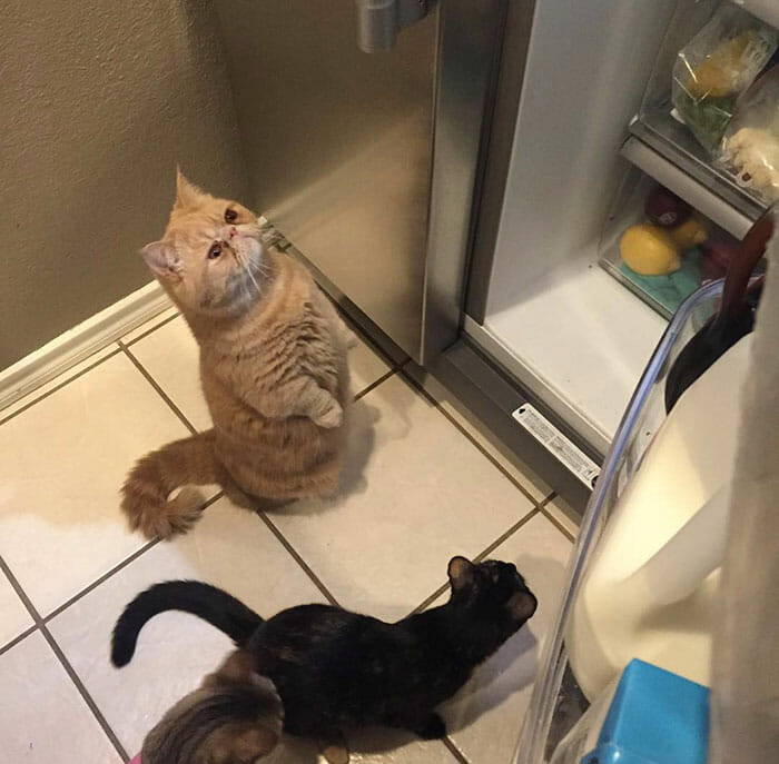 gato-humano_6
