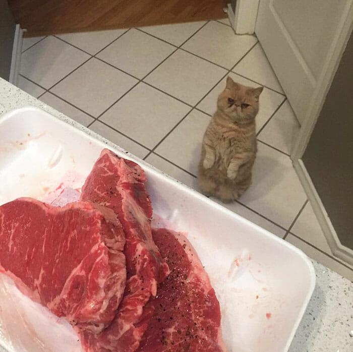 gato-humano_8