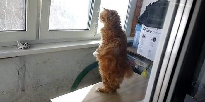 gato-humano_9