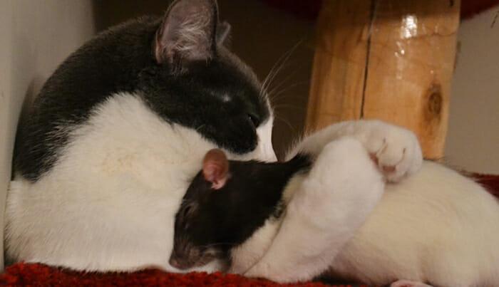 gatos-ratos-amigos_1